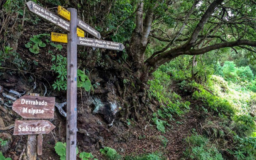 Wanderweg Nebelwald