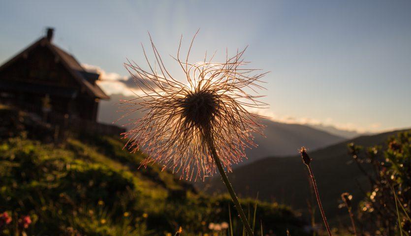 Blume in Sonne